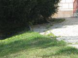 Chodník se může i zúžit, tráva už naznačuje jak moc. (6)