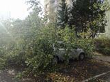 Středočeským hasičům připravil silný vítr přes tisíc zásahů! (5)
