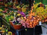 Jaro je za dveřmi a blíží se doba jarmarků (3)