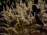 Jaro klepe na dveře už i na Příbramsku, čeká se přílet čápů (5)