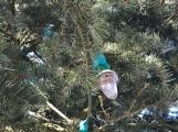 Foto dne: Vánoce, Vánoce přicházejí…. (2)