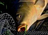 O víkendu zápolili v Rožmitále pod Třemšínem malí i velcí rybáři (26)