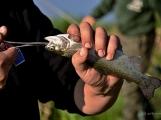 O víkendu zápolili v Rožmitále pod Třemšínem malí i velcí rybáři (36)