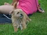 Pohoda pro rodiny, jejichž právoplatným členem je i pes (11)