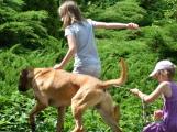 Pohoda pro rodiny, jejichž právoplatným členem je i pes (7)
