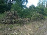 V lesoparku bylo pokáceno několik stromů (AKTUALIZOVÁNO) (1)