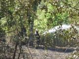 AKTUÁLNĚ: U vrcholu kopce Strážný, nedaleko Trhových Dušníků hoří les (28)