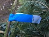 Nezakoupené vánoční stromky potkal drsný osud. Válí se v lese jako smetí! ()