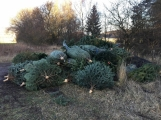 Nezakoupené vánoční stromky potkal drsný osud. Válí se v lese jako smetí! (3)