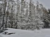 Zimní Brdy uvítaly účastníky pochodu pořádnou sněhovou nadílkou (10)
