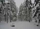 Zimní Brdy uvítaly účastníky pochodu pořádnou sněhovou nadílkou (18)