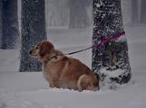 Zimní Brdy uvítaly účastníky pochodu pořádnou sněhovou nadílkou (36)