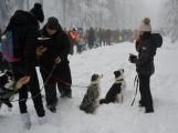 Zimní Brdy uvítaly účastníky pochodu pořádnou sněhovou nadílkou (71)