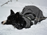 Zimní Brdy uvítaly účastníky pochodu pořádnou sněhovou nadílkou (73)