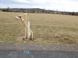 Video: Neznámý vandal poničil stromky u cyklostezky do Bohutína (4)
