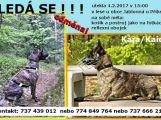 Zaběhla se Kajda! Neviděli jste ji ?! (3)