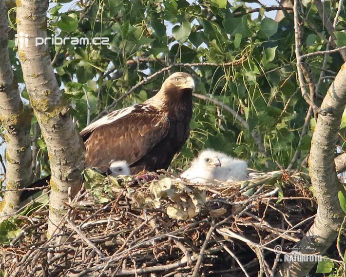 V letošním roce ornitologové napočítali 7 …