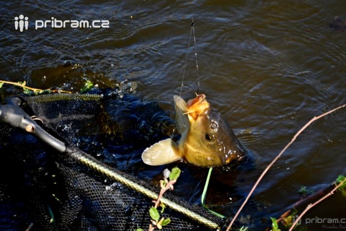 Břehy rybníka Jez v Rožmitále pod Třemšínem …