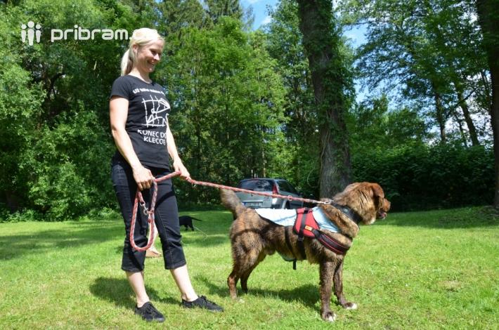 Tradiční soutěž psího sympaťáka, která se …