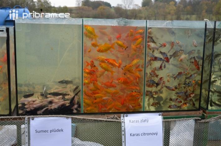 Velkým lákadlem byla expozice sladkovodních …