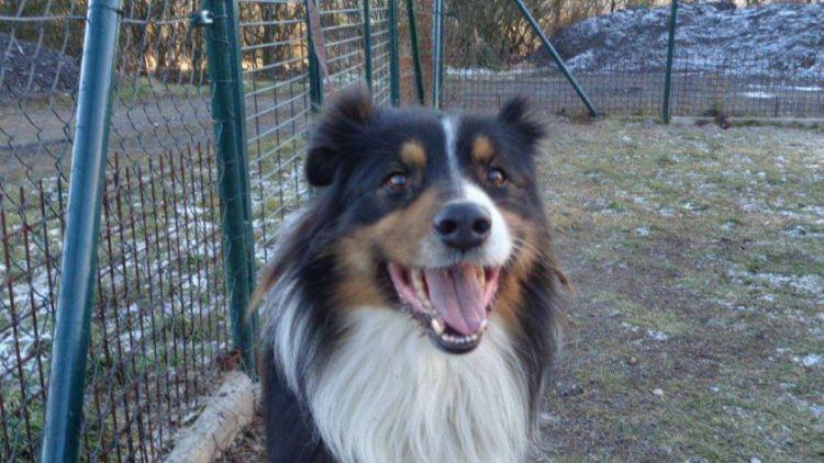 V Lazeckém útulku zůstává jeden pes nalezený po Silvestru
