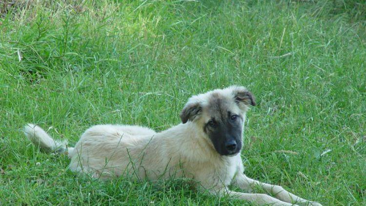 Kvůli psům došlo na Příbramsku ke dvěma nehodám v jeden den