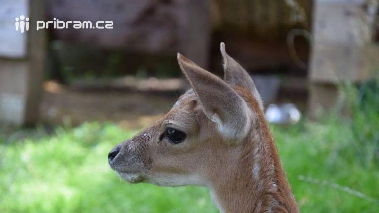 Nechte jelena žít, hlásají petice, které už podepsaly tisíce lidí