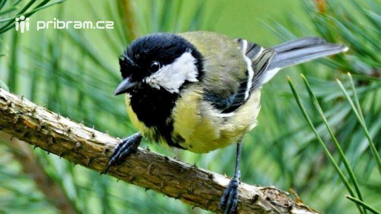 Tuhé mrazy zpomalily návrat ptactva do Čech