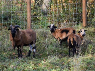 Zvířata v lesoparku u Litavky nekrmte, můžete jim ublížit, varují pracovníci městských lesů