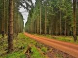 Brdští lesníci budou chránit lesy před kůrovcem společně