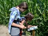 Kukuřice neroste, bludiště v Chrašticích prozatím není v provozu