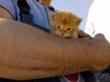 Houbaři našli v lese u Suchodolu šest koťat. Můžete jim poskytnout domov právě vy?