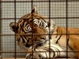 Konec cirkusů v Čechách? Nejen petice, ale i protesty provázejí problematiku o vystupování a drezuře zvířat