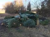 Nezakoupené vánoční stromky potkal drsný osud. Válí se v lese jako smetí!