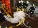 Hasiči na Příbramsku zachránili velblouda, který spadl do rybníka