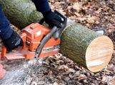 V Příbrami dojde k pokácení téměř třiceti stromů