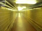 Rekonstrukce uzavře nemocniční koridor, odstávka čeká i babybox