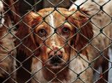 V lazeckém útulku čeká na adopci 11 psů