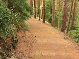 Neznámý vandal ničil stromy ve Starém Podlesí