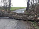 Silnice na Višňovou je uzavřena, hrozí pád větví