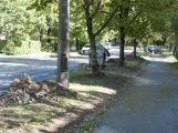 V ulici 28. října se pokácí maximálně čtyři stromy