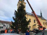 Foto dne: Vánoční stromek už je na náměstí, rozsvítí se za týden