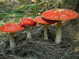 Záchranáři varují před jedovatými houbami