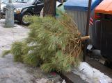 Technické služby dnes zahájily odvoz stromků, jak se dále využijí?
