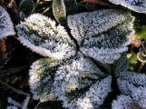 ČR čekají další mrazivé dny, v noci může být i kolem minus 20 st.