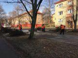 Začalo kácení lip v ulici 28. října