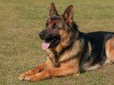 Poplatek za psa je nutné uhradit do konce března