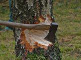 """Radnice vyřešila definitivně """"stromovou otázku"""""""