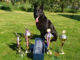 Policejní mistrovství psovodů v Solenicích