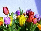 Namalujte tulipán jako podporu onkologicky nemocným